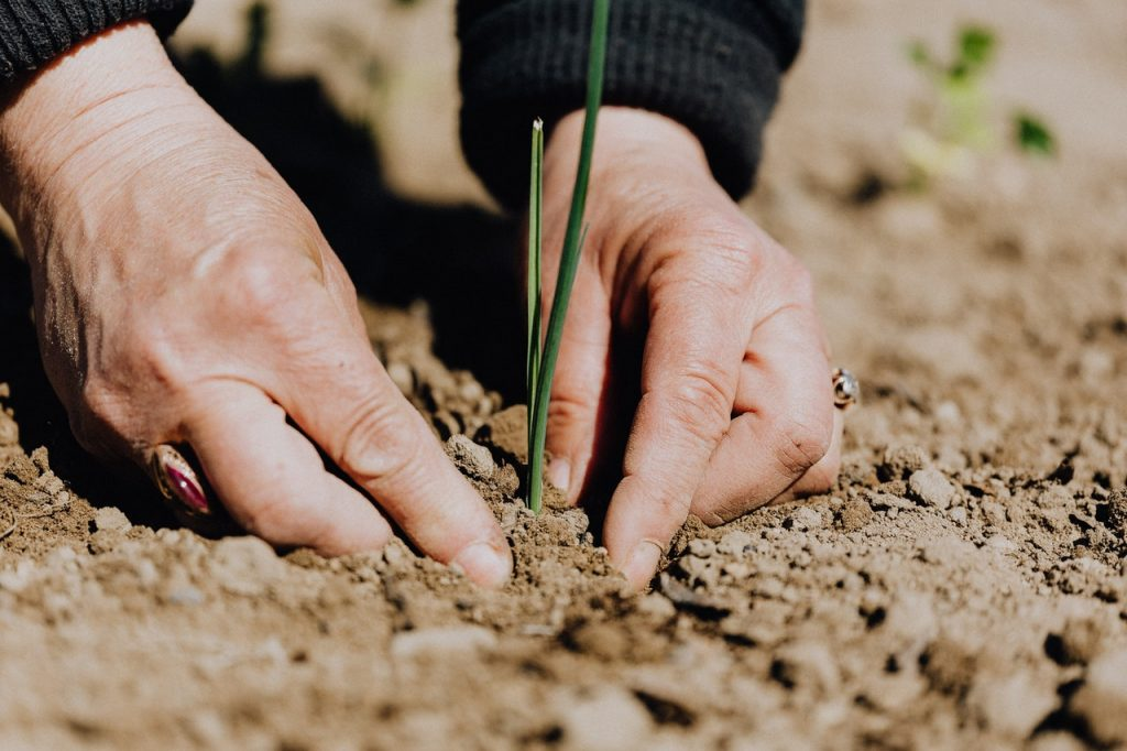 Farmer planting Seed: Secret of Increase by Zamai Banje